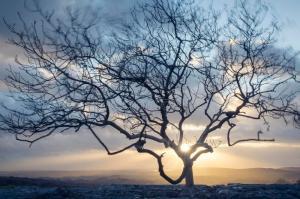 vind-blåst-träd-62059316
